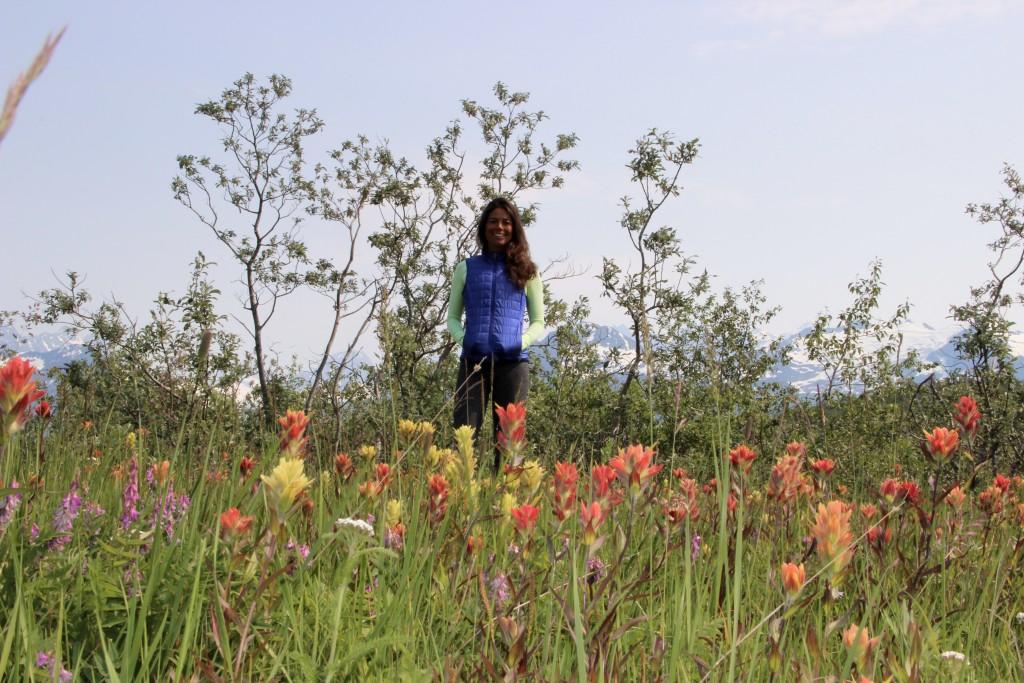 Alaksa Wildflowers